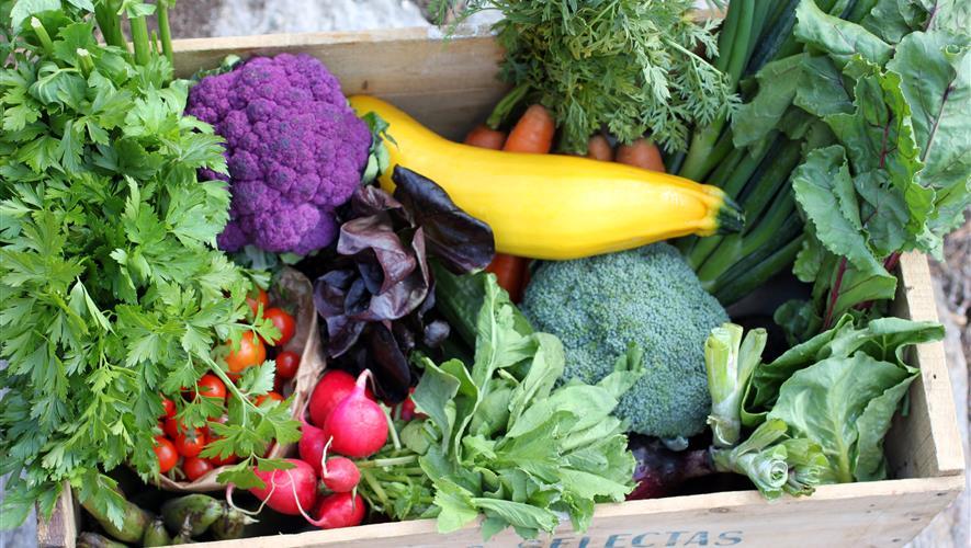 Økologisk grønnsakskasse, levering i Østfold og Oslo etter avtale.